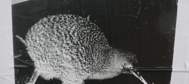 Qu'est-ce qu'un kiwi?
