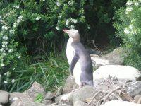 Mon copain le pingouin