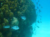 Plongée sous-marine sur l'île de la Tortue