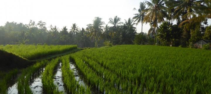 Ubud, le Bali des cartes postales
