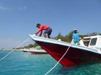Iles Gili, entre fonds marins et faune nocturne
